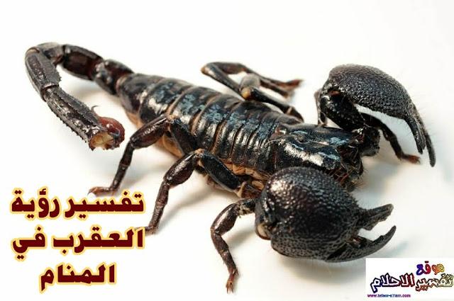 تفسير رؤية حلم العقرب الاسود في المنام - Interpretation of seeing the dream of a black scorpion in a dream
