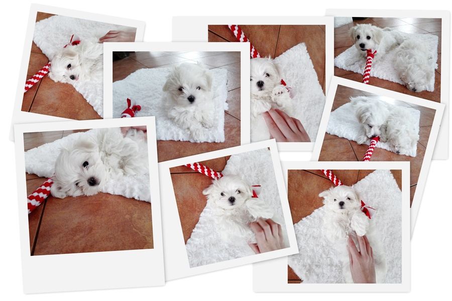 blog o szczeniaczkach