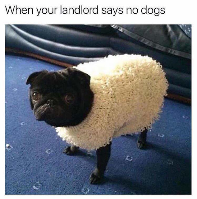 When your landlord says no dogs allowed funny picture