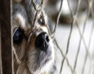 Festival del cane a Yulin, in Cina