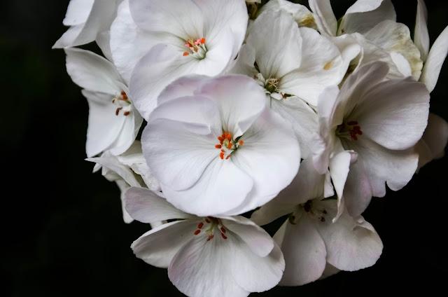 Нежност-Tenderness