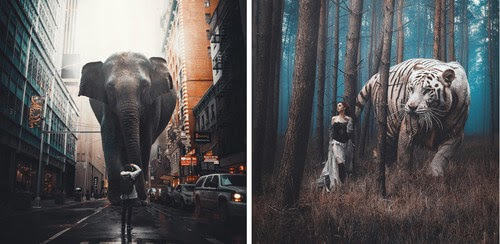 00-truthbynature-Surrealism-in-Animal-Photo-Manipulation-www-designstack-co