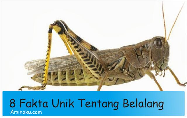 Fakta unik tentang belalang