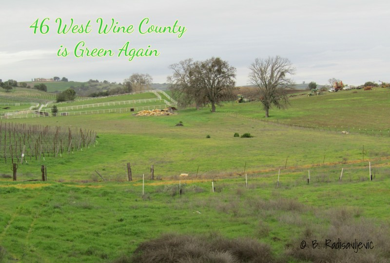 46 West Wine County is Green Again
