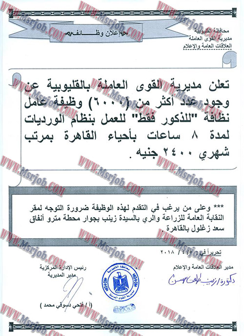 اعلان وزارة القوي العاملة عن 6000 وظيفة براتب 2400 جنية للذكور فقط
