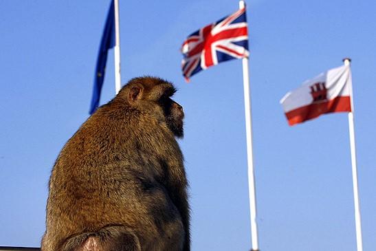 Gibraltar-Monkeys-Malaga-Trips