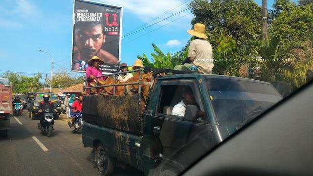 Kemacetan di Pasar Keppo, Pasar Sapi Terbesar di Madura