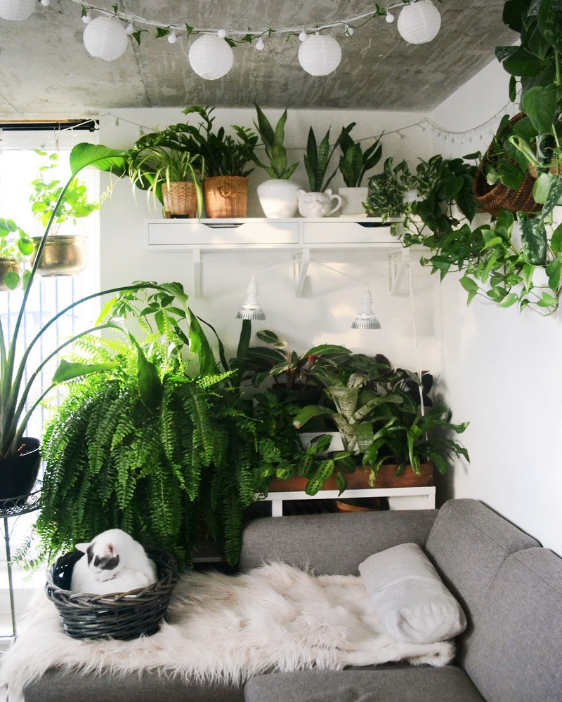 Urban jungle, plantas verdes en maceta en el interior de casa