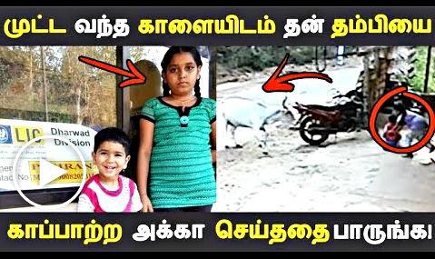 மாட்டிடம் இருந்து தான் மட்டும் தப்பிக்கவேண்டுமென நினைக்காமல் தனது தம்பியையும் சேர்த்து தூக்கி சென்று காப்பாற்றிய சம்பவம் இணையத்தில் வைரலாக பரவி வருகிறது. Tamil viral videos, Latest CCTV footage.