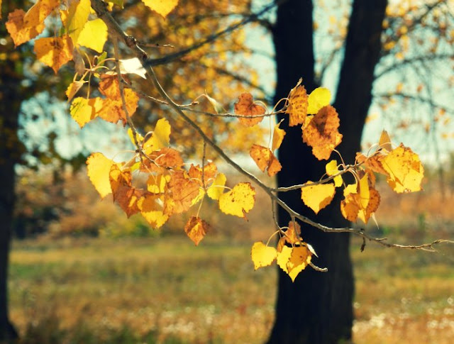 Yellow Fall Foliage: Grow Creative