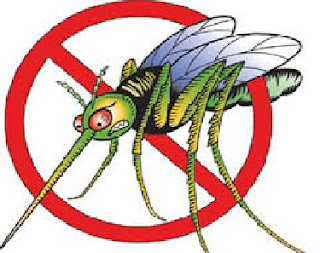 How To Get Rid Of Mosquitoes Inside Your House