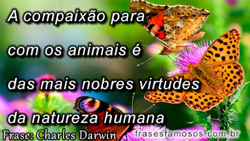 A compaixão para com os animais é das mais nobres virtudes da natureza humana