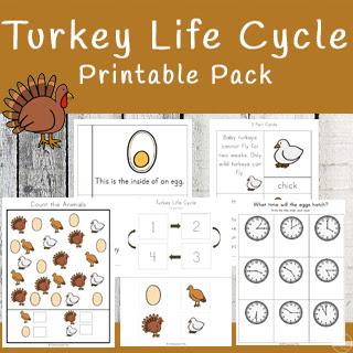 turkey life cycle free printable