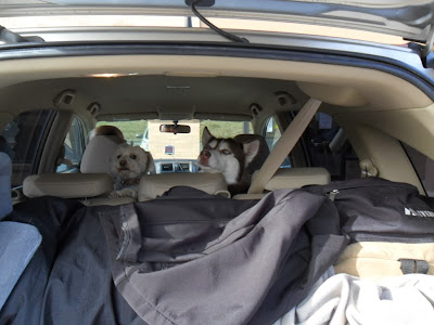 Tips for road trips with dogs, dog friendly, pet friendly, travel with dogs