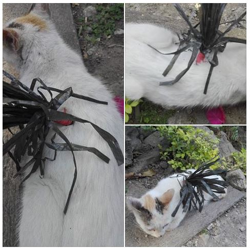 Shocking ► Angry Netizen Shares How Her Beloved Pet Cat Was Cruelly Killed by her Neighbors Using a Homemade Arrow!