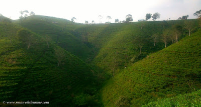 Candi Cetho, Candi di Atas Kahyangan kebun teh kemuning