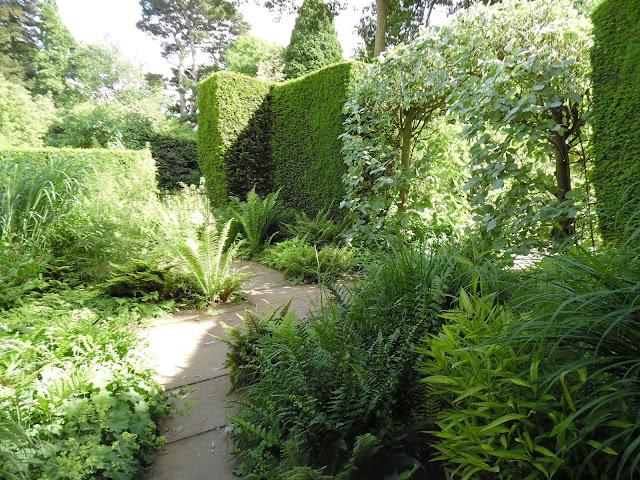 cienisty zakątek w ogrodzie