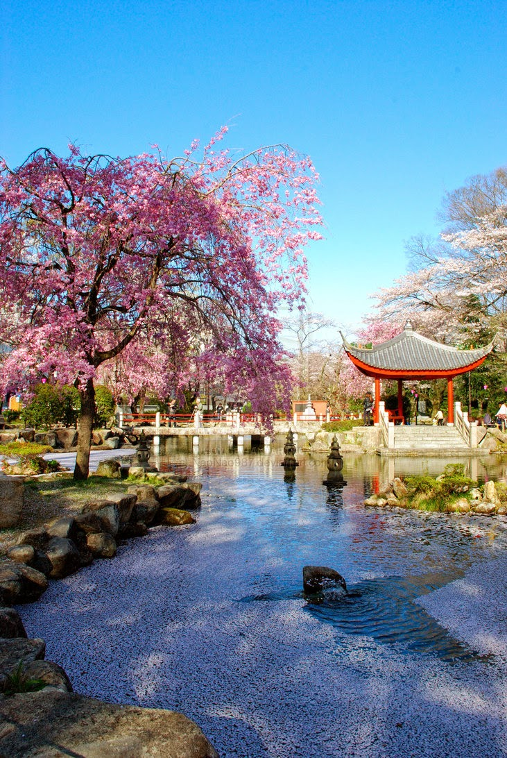 Japanese Garden Wallpapers: Japanese Cherry Blossom Garden Wallpaper