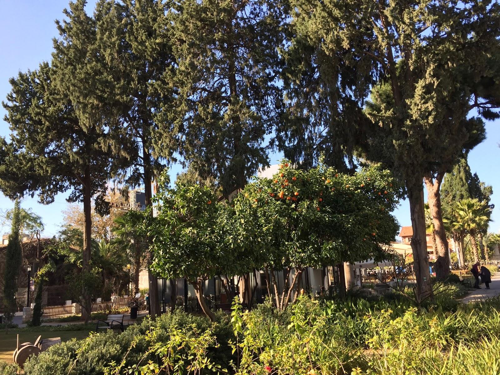 Pomeranče v Saroně v Tel Avivu