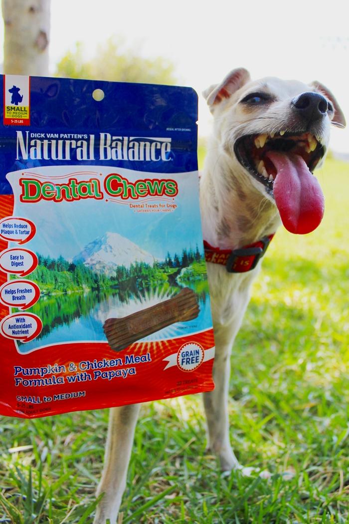 Reviews Natural Balance Chicken Sweet Potatoe Wet Dog Food