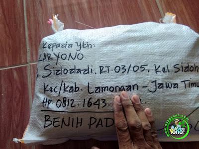 Packing benih padi pesanan  Mas KARYONO Lamongan, Jatim