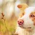 10+1 zajímavost o psech: Psí smysly