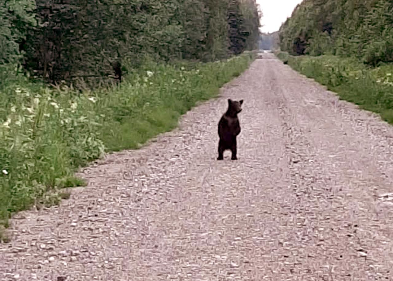 Lāči Latvijā 2