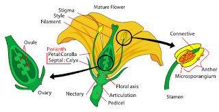 Class 10 - Biology - How do Organisms Reproduce?