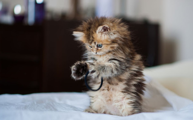 صور وخلفيات قطط Cute Cat Picture wallpaper