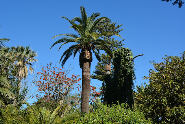 Park Genoves Cadiz palm