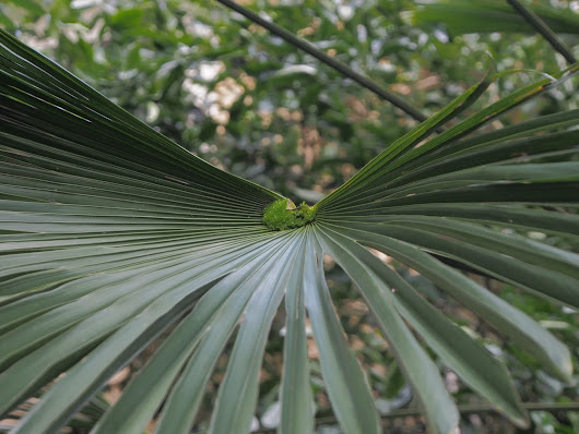 Wednesday Vignette: Forest on a Frond