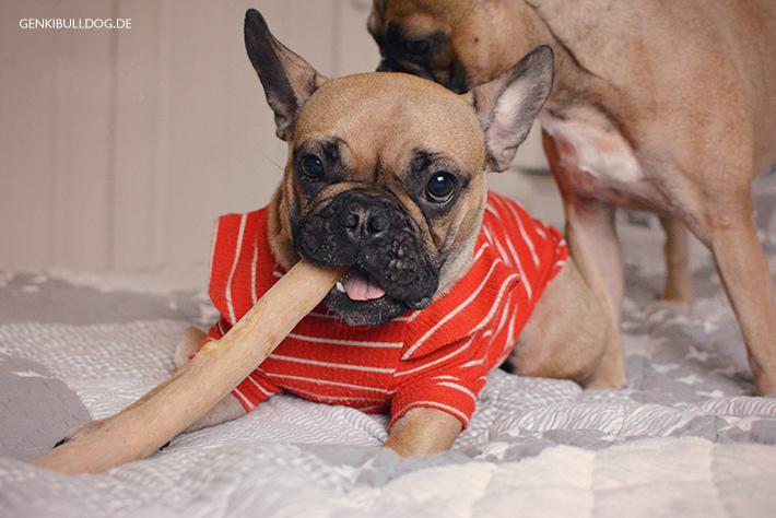 Kaffeebaumwurzel Kauwurzel für Hunde