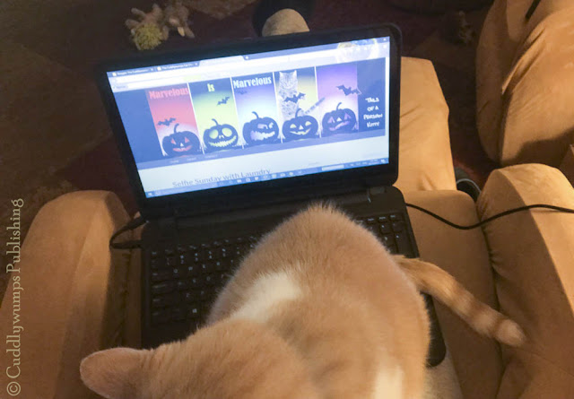 Real Cat Webster sitting on laptop