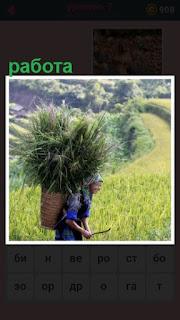 на поле работает женщина с корзиной за спиной