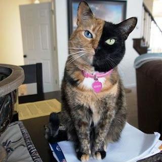 Foto-foto Kucing Lucu Sedunia