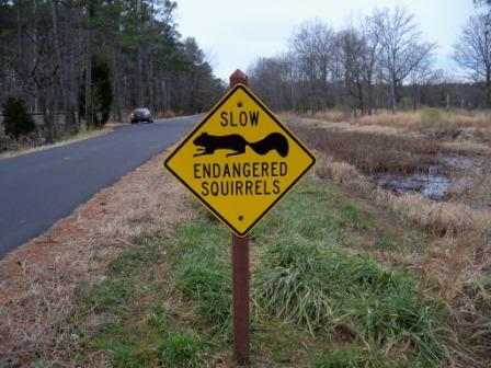 Sign at Blackwater National Wildlife Refuge, protecting squirrels