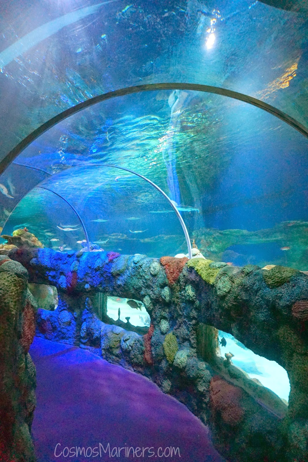 5 Places for Family Fun in Charlotte, North Carolina   CosmosMariners.com