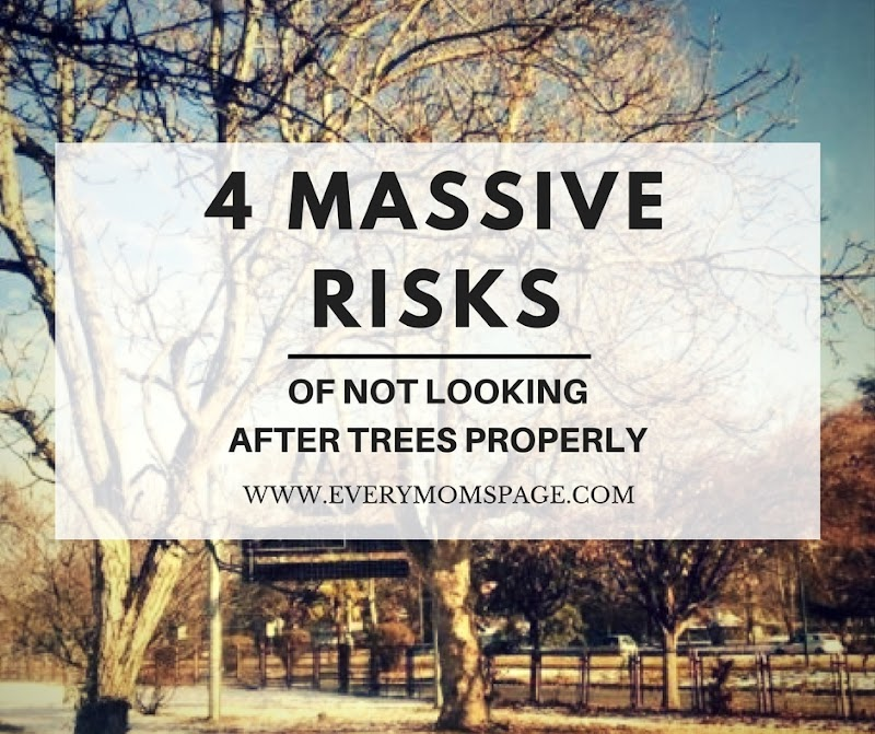 4 Massive Risks of Not Looking After Trees Properly