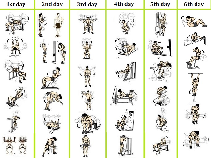 Daily Gym Workout Routine For Weight Gain
