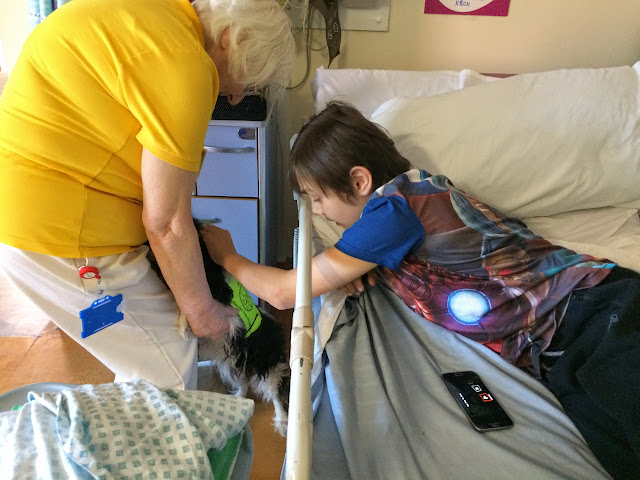 Pets as Therapy Birmingham Children's Hospital