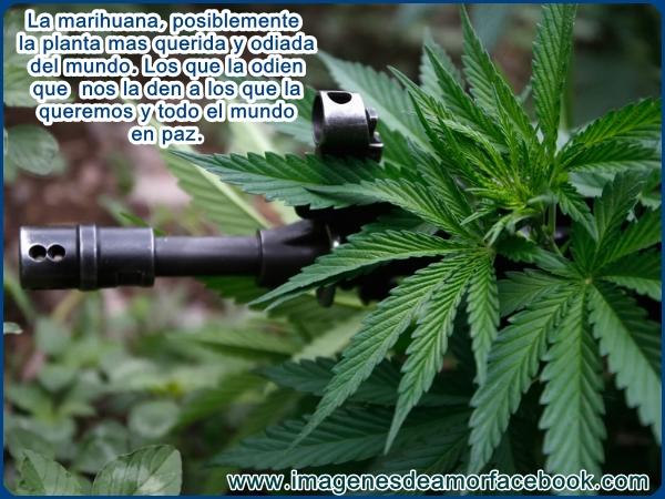 Imágenes De Marihuana Con Frase Para Facebook