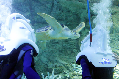 sea trekkers have a visit with a turtle