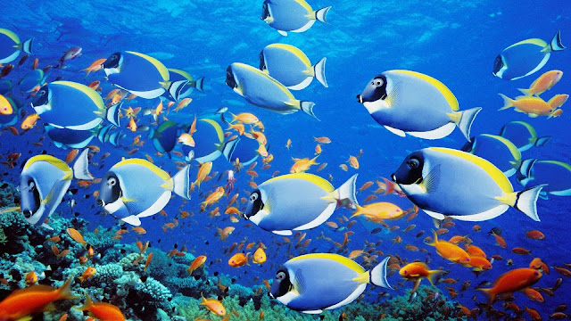Download-wallpaper-underwater-world-coral-reef-tropical-fishes-ocean-underwater