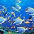Free Download Amazing Ocean Underwater Coral  for Android, Apple, and Desktop