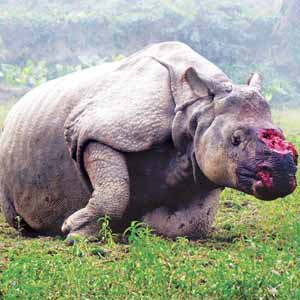 statistics of rhino poaching in assam
