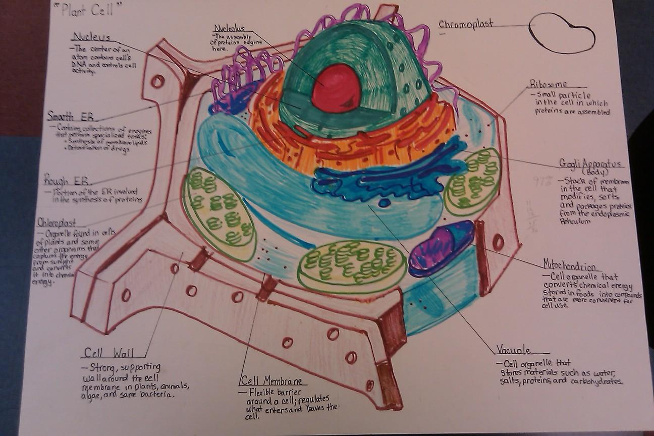 Biology: CELLS WEBQUEST - BIOLOGY