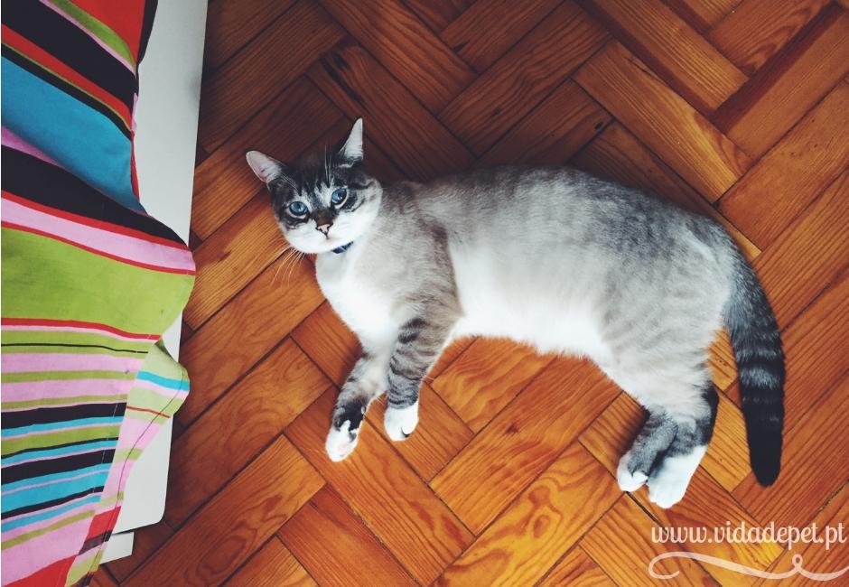 Killy + a coriza nos olhos dos gatos + cura de coriza + felinos + blogue de animais de estimação + portugal + português + vida de pet + pedro e telma + partilha de histórias reais