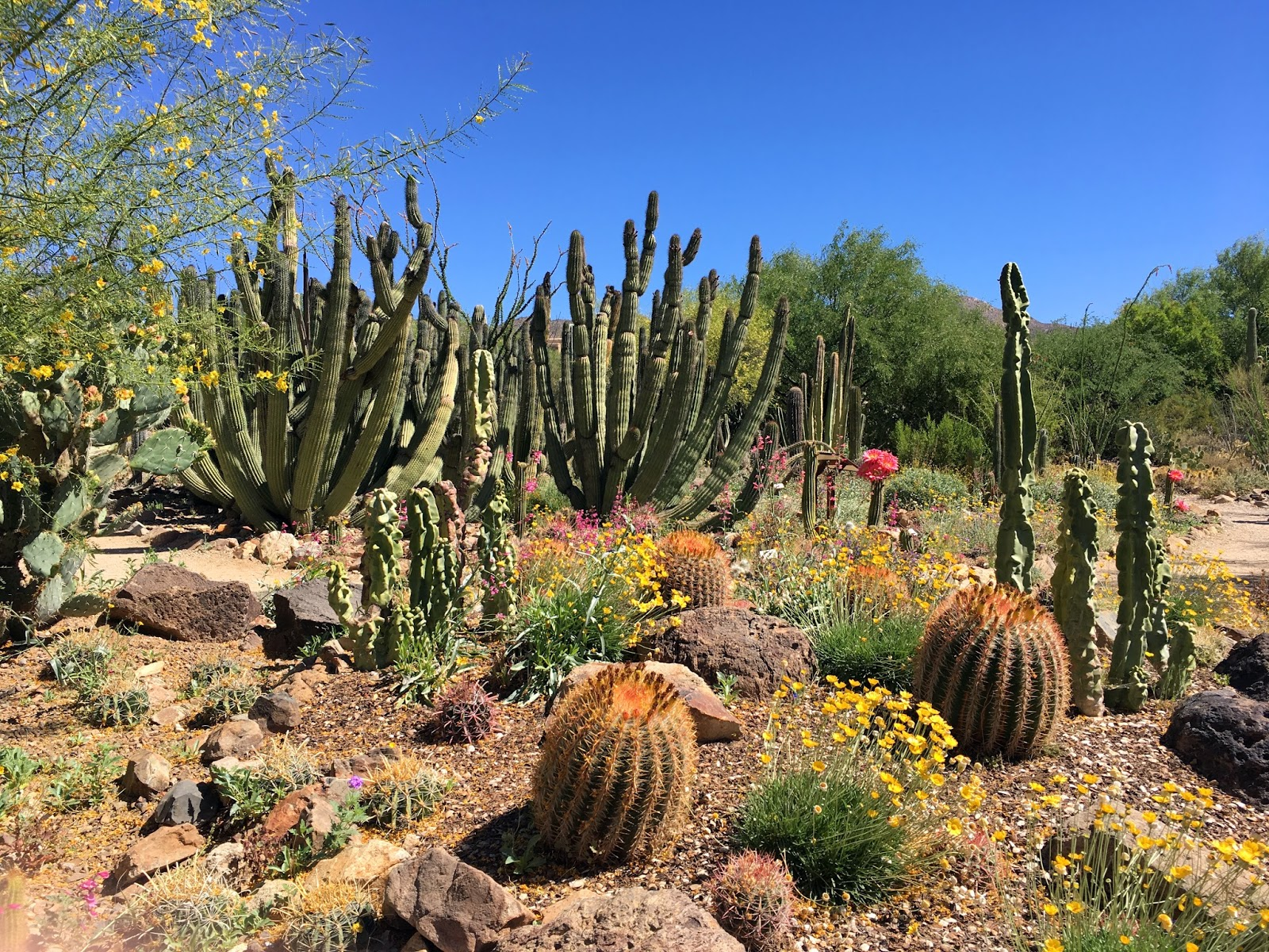 Desert Garden In Bloom
