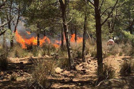 اندلاع حريق مهول بغابة أفرا ضواحي الناظور