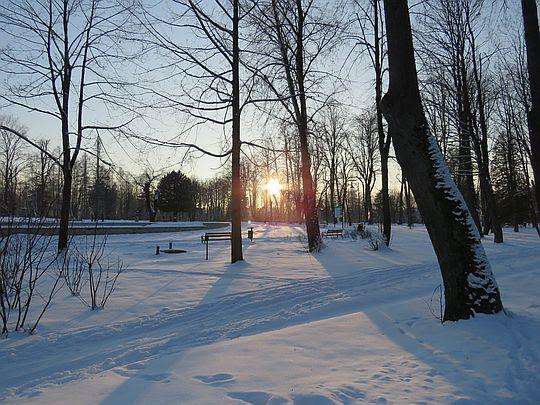 Przez parkowy drzewostan mruży słońce.